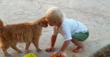 За децата и животните